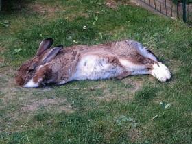 Kaninchen Im Haus Und Im Garten Tierische Mitbewohner In Haus Und